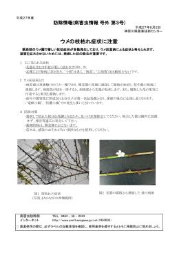ウメの枝枯れ症状に注意