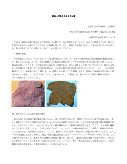 間違いが教える生きる知恵 京都大学総合博物館 大野照文 606