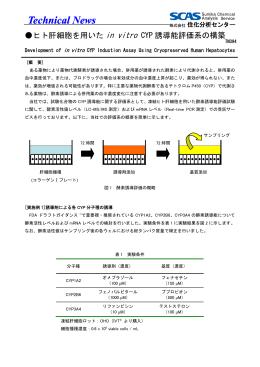 ヒト肝細胞を用いたin vitro CYP誘導能評価系の構築