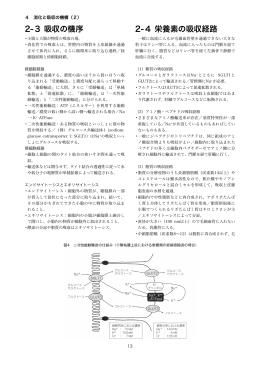 4 消化と吸収の機構(2)(ノート)