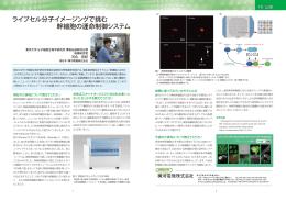 ライブセル分子イメージングで挑む 幹細胞の運命制御システム