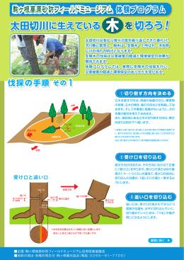 支障木の伐採体験プログラム実施手順書