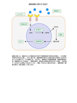 細胞増殖に関与する因子