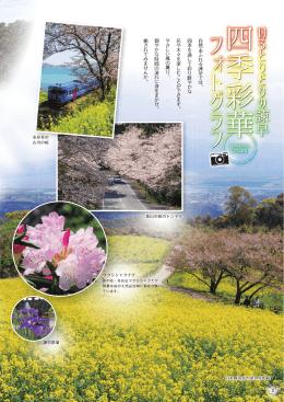 白木峰高原の菜の花と桜 木 白木木峰 白木峰 白木 白木峰 木峰 白木