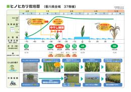ヒノヒカリ栽培暦 (香川県全域 37株植)