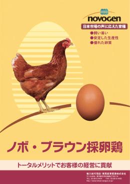 ノボ・ブラウン採卵鶏