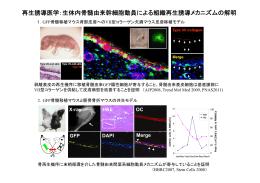 再生誘導医学:生体内骨髄由来幹細胞動員による組織再生誘導