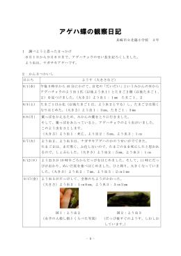 アゲハ蝶の観察日記