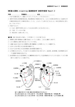 脈管学実習チェックリスト