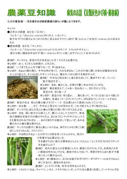 豆類灰色かび病・菌核病