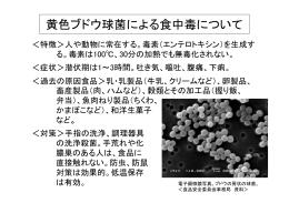 黄色ブドウ球菌による食中毒について