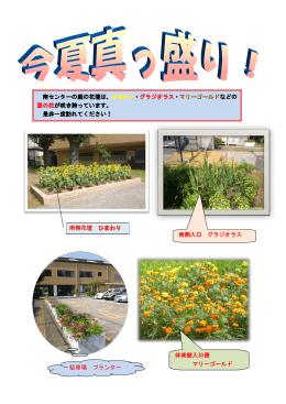 南センターの庭の花壇は、ひまわり・グラジオラス・マリーゴールドなどの
