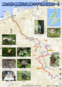 関の大杉・金剛杉と山野草・アテビ林を巡るルート