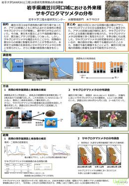 岩手県織笠川河口域における外来種 サキグロタマツメタの分布