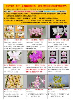 ワカヤマオーキッド 冬の蘭展特別リスト 2013.12月1日から15日まで