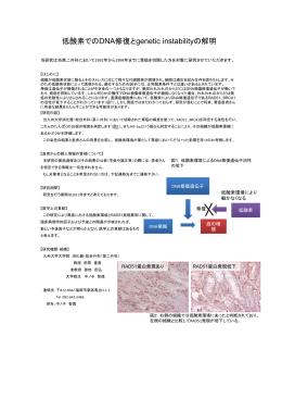 低酸素でのDNA修復とgenetic instabilityの解明