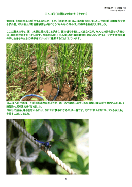 2012年18号 田んぼの虫たち(その1