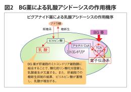 図2 BG薬による乳酸アシドーシスの作用機序 - D