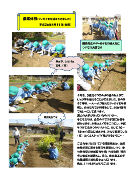 農業体験(ジャガイモを植えてきました) 平成26年4月11日(金曜) 園長