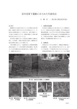 市川市雷下遺跡にみられた生痕化石