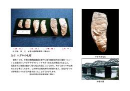 [24] マガキの化石