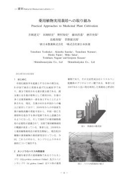 010 of yakuyo36.1 - 薬用植物・生薬 栽培 研究 | カンゾウ(甘草