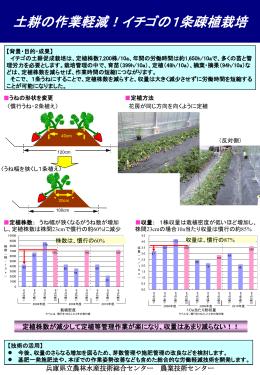 土耕の作業軽減!イチゴの1条疎植栽培