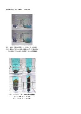 半透膜の性質に関する実験 小林 邦佳