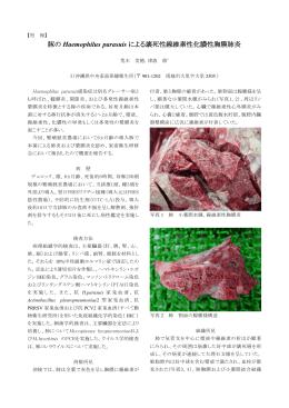 豚の Haemophilus parasuis による壊死性線維素性化膿性