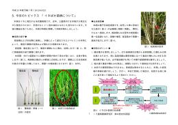イネばか苗病について - MATe 三重県農業技術情報システム
