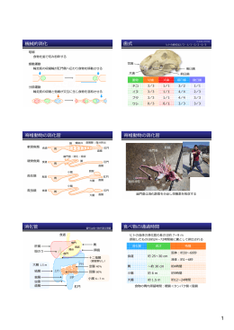 機械的消化 式 脊椎動物の消化管 脊椎動物の消化管 消化管 べ物の