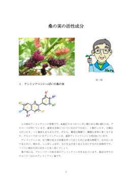 桑の実の活性成分(PDF)
