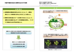 代謝や機能を  めた植物を  みだす技術