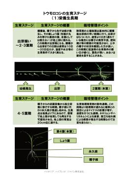 トウモロコシの生育ステージ (1)栄養生長期