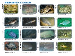 神戸店 須磨浦で見れる生物達