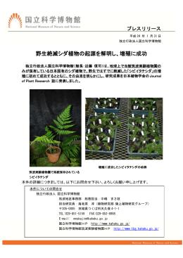 野生絶滅シダ植物の起源を解明し、増殖に成功