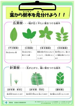 2015年6月号<葉から樹木を見分けよう>(PDF:556KB)
