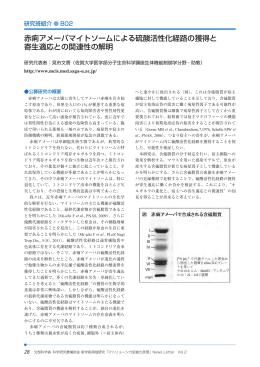 赤痢アメーバマイトソームによる硫酸活性化経路の獲得と 寄生適応との