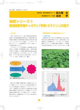 緑肥シリーズ③ 新規緑肥作物チャガラシ「辛神(カラジン)」の