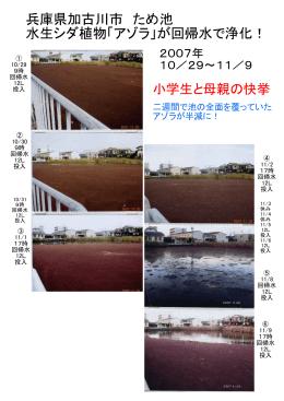 兵庫県加古川市 ため池 水生シダ植物「アゾラ」が回帰水で浄化!