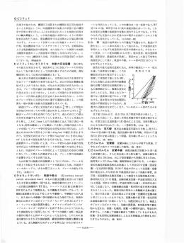 PDF表示
