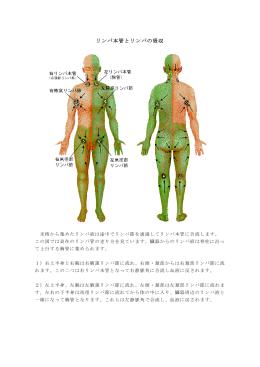 リンパ本管とリンパの吸収