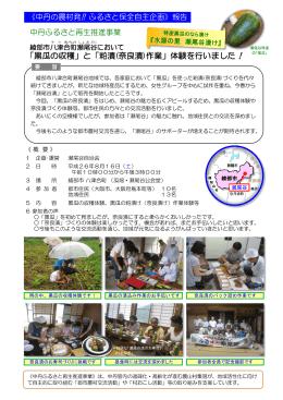黒瓜の収穫と粕漬け(奈良漬け)作業体験会