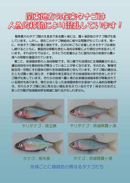 タナゴ類放流防止パンフレット