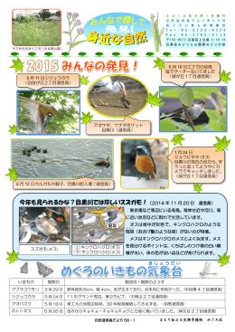 今年も見られるかな?目黒川では珍しいスズガモ!(2014 年 11 月 20